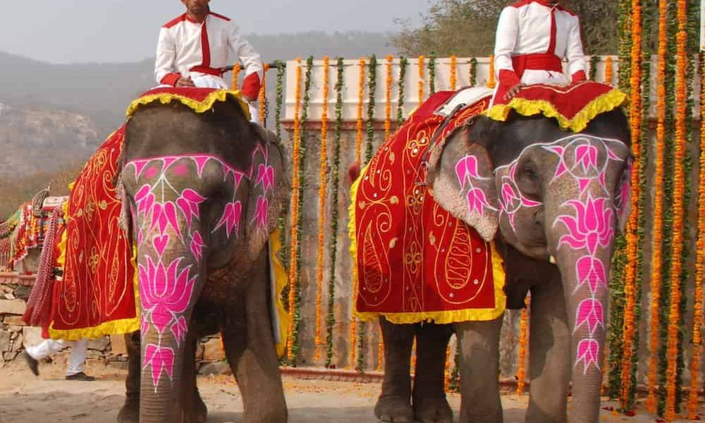 Royal Rajasthan Luxury Tour Elephants introduction shot
