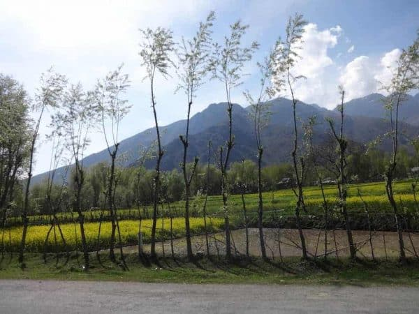 vale of kashmir countryside